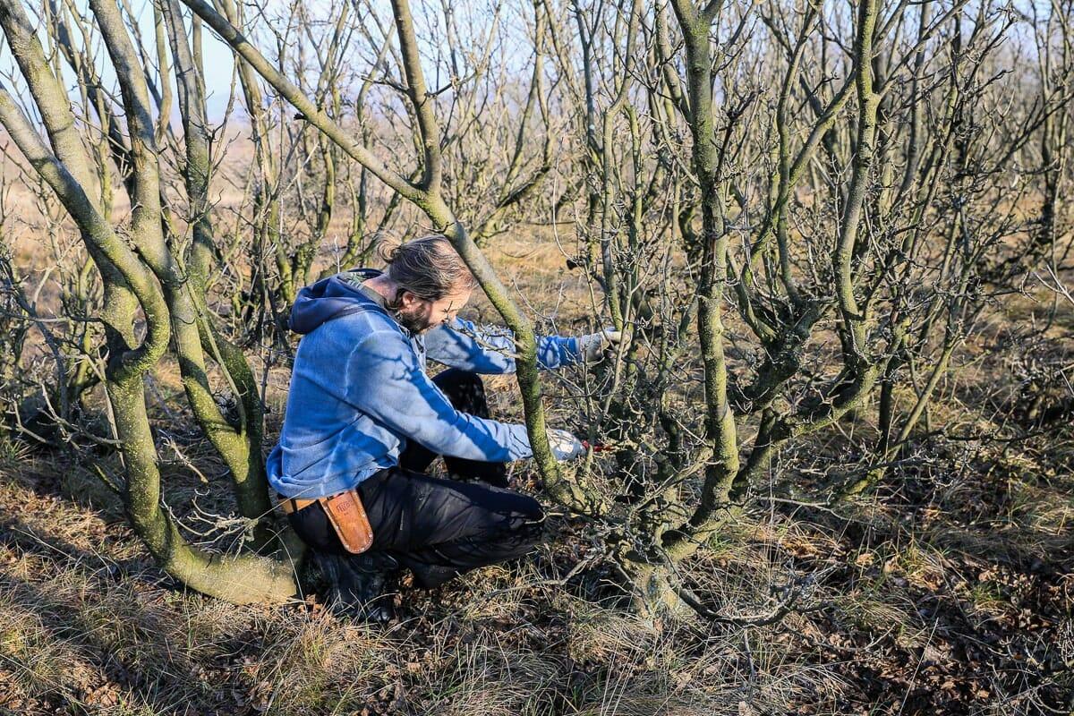 Yamadori – Bäume sammeln in der Natur Bild 10
