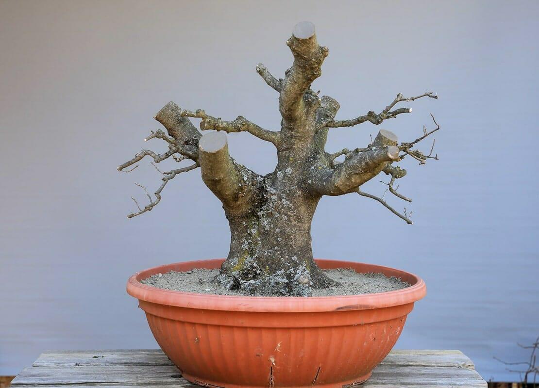 Yamadori – Bäume sammeln in der Natur08