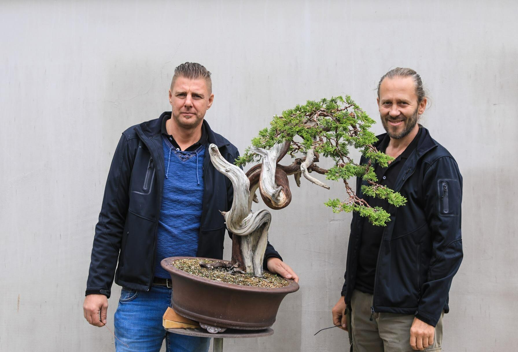 Bonsai Workshop Gestaltungen von 2017 bis 2019
