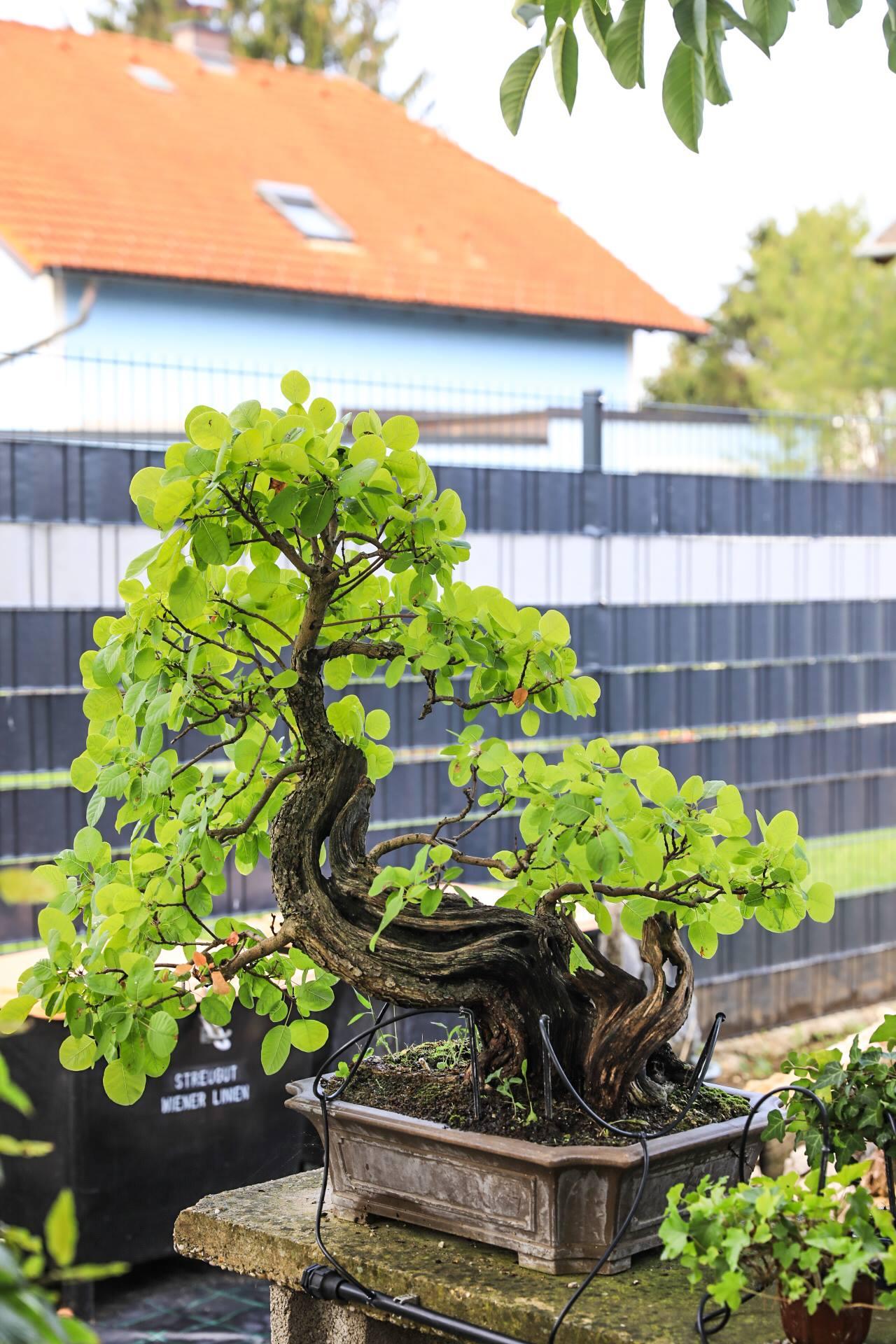 Garten von Silvia