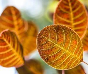 Der Bonsai mit seinen Blätter und Nadeln.