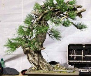 Baumanalyse die genaue Betrachtung der Rohpflanze  vor der Gestaltung.
