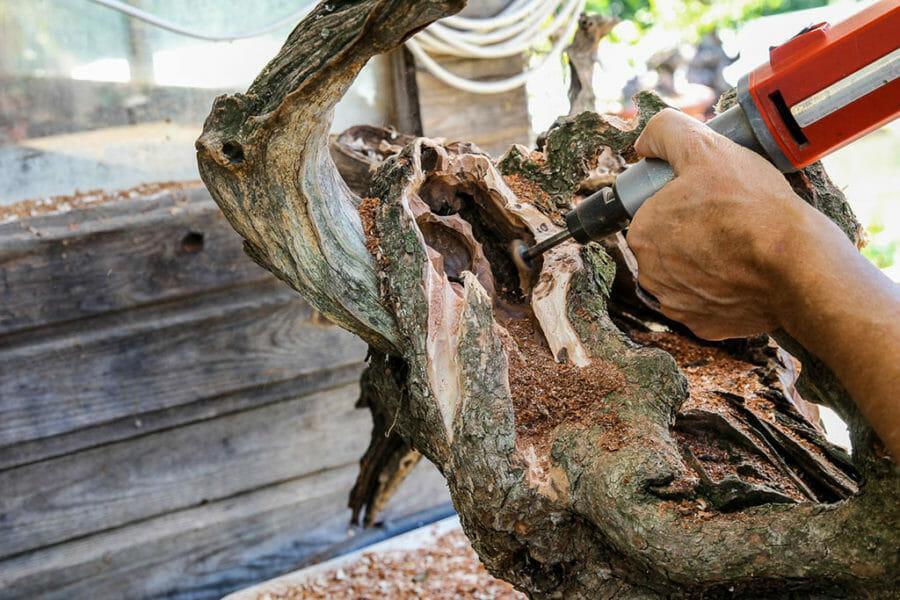 Ein Gestaltungsbeispiel mit Tanuki – die Totholzvorbereitung