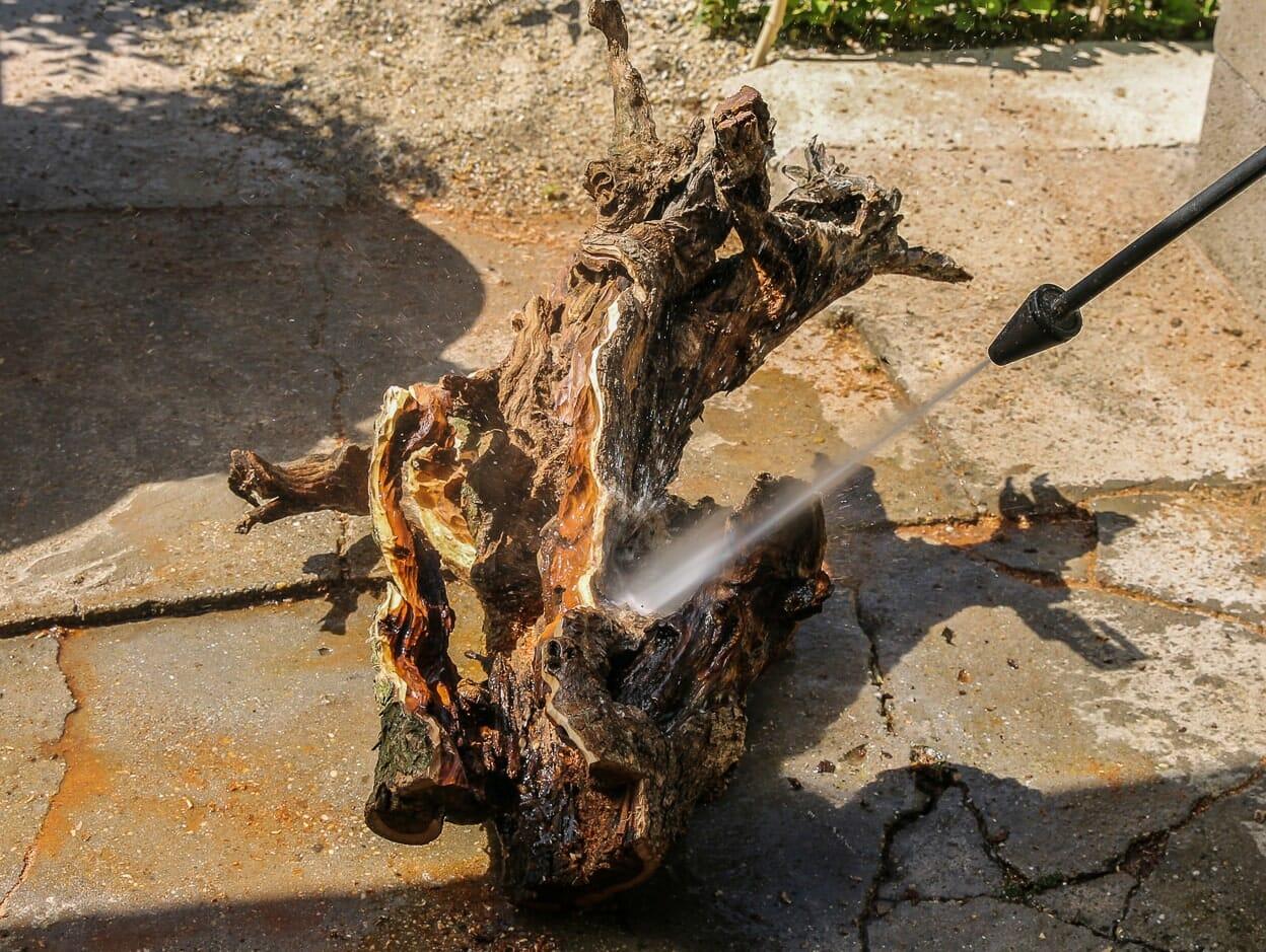 Totholz reinigung von einem Tanuki Bonsai