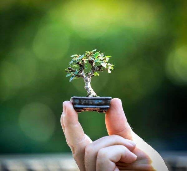 September Workshop nur Nadelbäume
