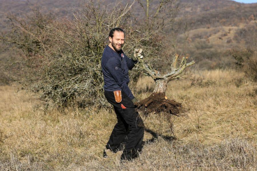 Bonsai-Bäume in der Natur finden/erkennen (Yamadori)