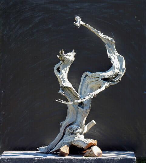 Ein Tanuki Totholz von Josef Burschl